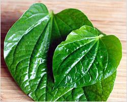 Betel Leaf (Daun Kaduk)