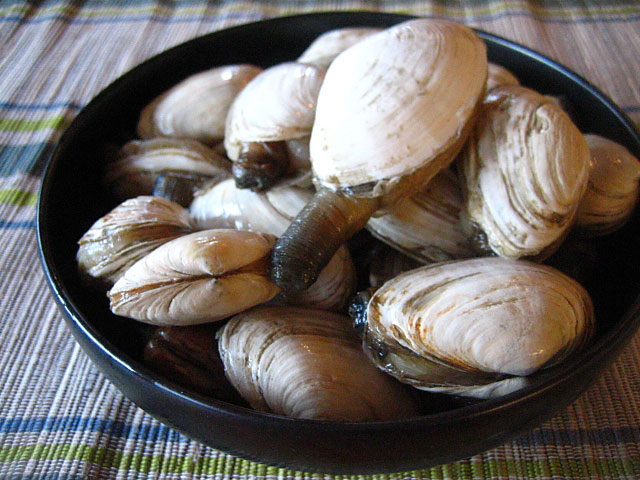 Soft Shell Clams/Steamers/Long Necks