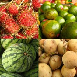 The Fruits of Malaysia