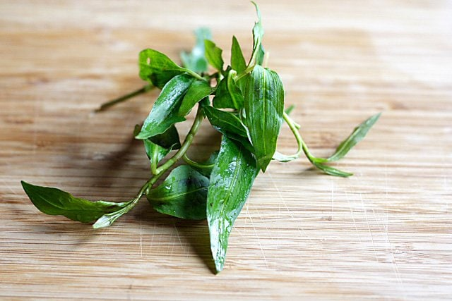 Polygonum Leaves/Vietnamese Mint Leaves (Daum Kesom/Daun Laksa)
