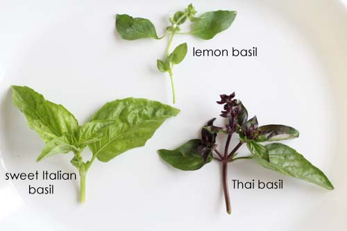 Lemon basil, sweet Italian basil and Thai basil.