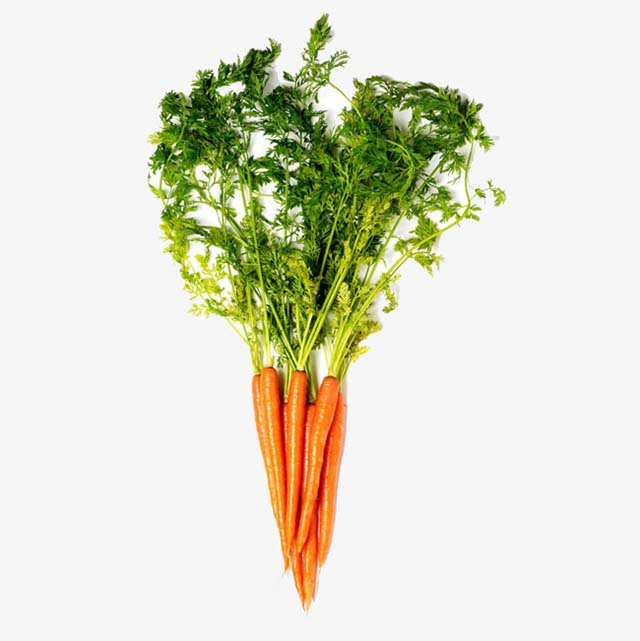 Carrot top with green stems and leaves.