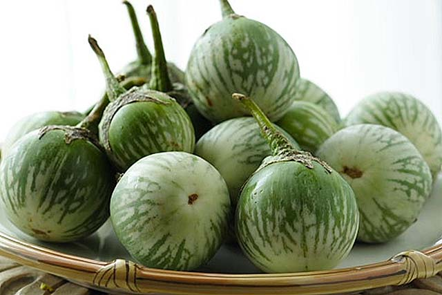 Thai round egg plant is a key ingredient in authentic green curry.