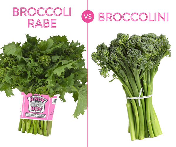Is broccolini the same as broccoli rabe? No they are different when compared side-by-side in this broccolini vs broccoli rabe picture.