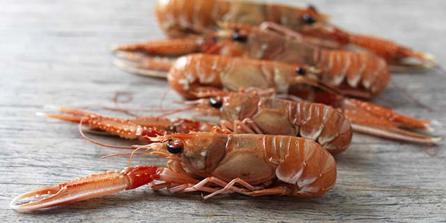 Raw Italian scampi or langoustines, a crustacean with pale pink hard shell that looks like mini lobsters.