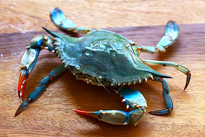 A female blue crab on a cutting board.